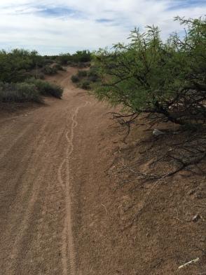 Desert Single Track